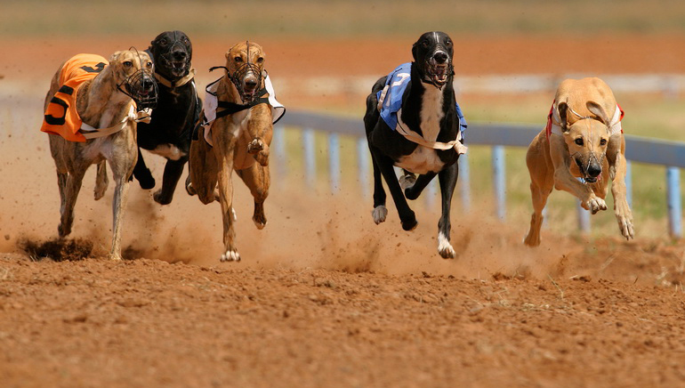 Greyhound Racing Reconsidered